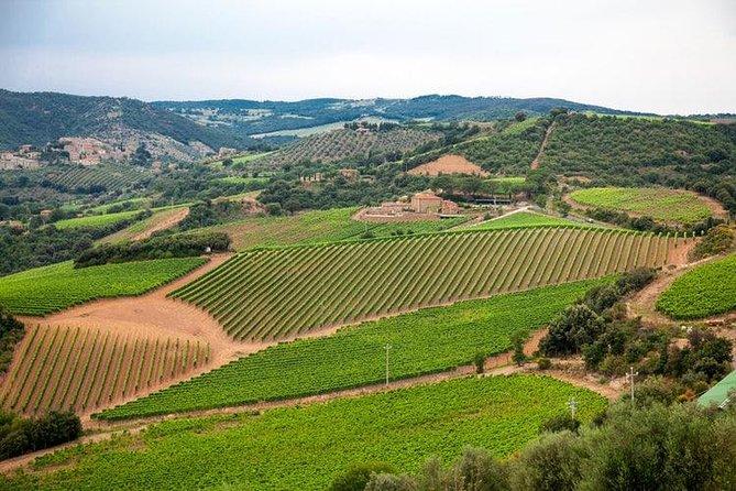 Die komplette Weintour Brunello, Nobile, Chianti-Weinerlebnis