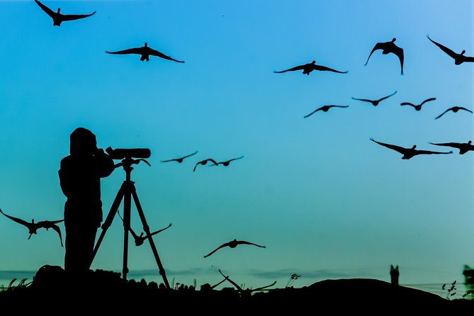 Island Pag Bird Private Watching Tour