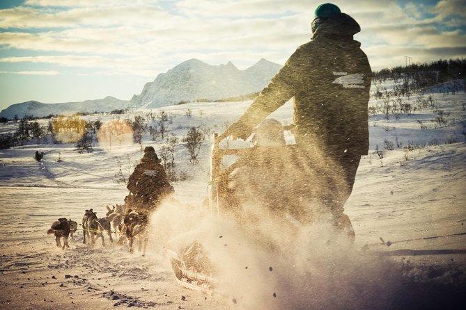 Rit op een huskyslee inclusief kampvuurlunch, vanuit Tromsø