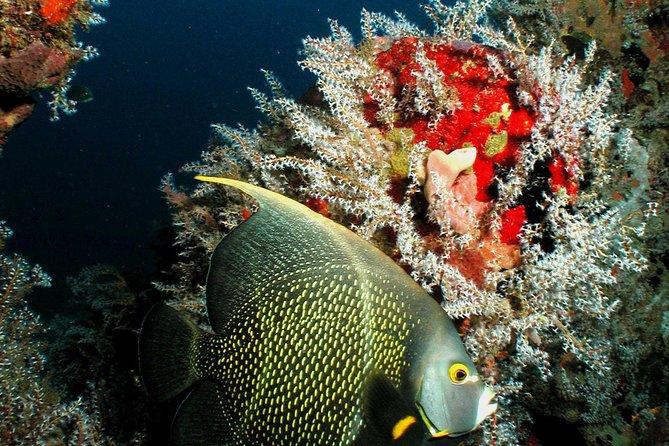 St Lucia Certified Scuba Diving Tour