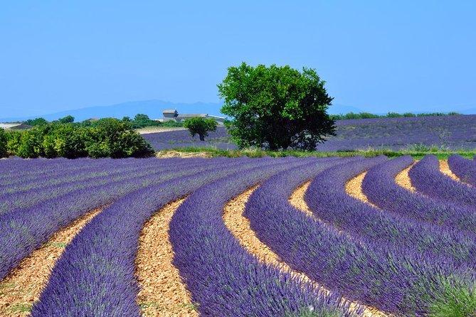 Provence Lavendelvelden en Aix-en-Provence Tour vanuit Marseille