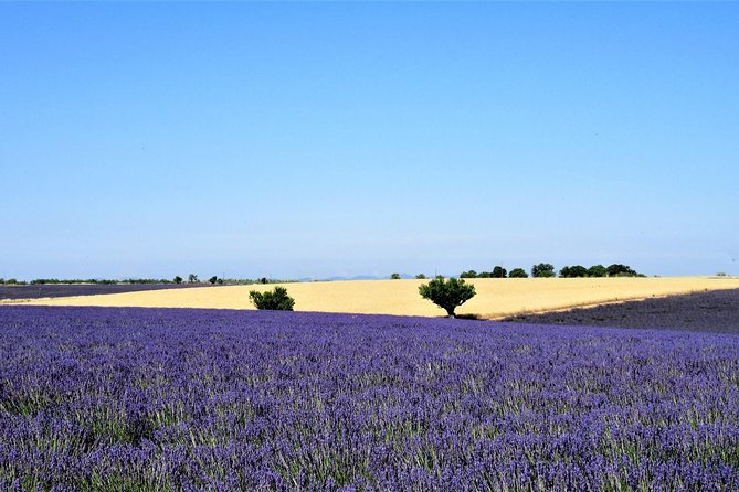 Marseille Shore Excursion: Shared Lavender Tour