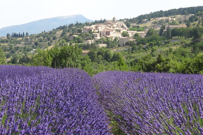 Lavender Tour Sault from Marseille photo 1