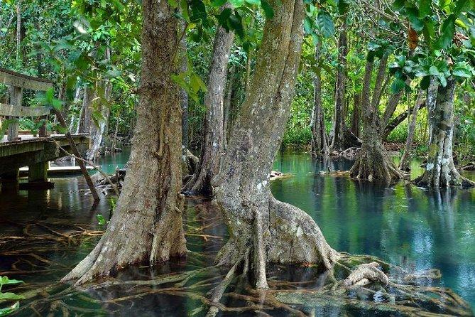 Wandeling, zwemmen en drinken in Mangrove National Forest