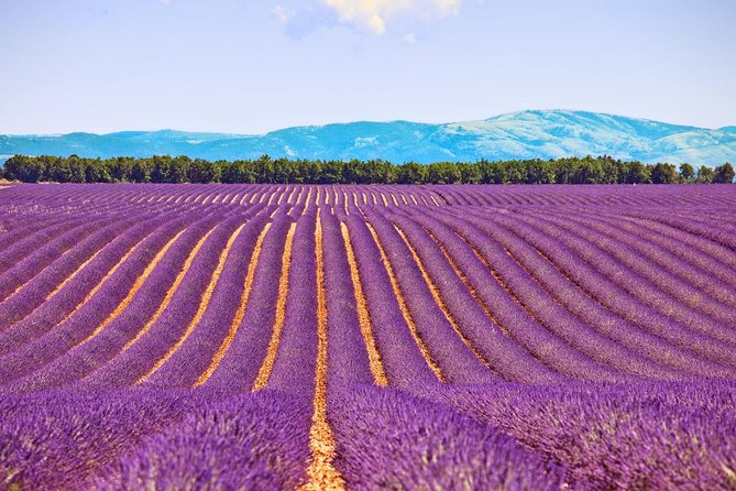Small-Group Day Trip from Avignon: Lavender in Valensole Plateau