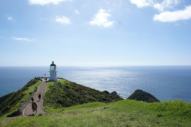 Far North New Zealand Tour Including 90 Mile Beach and Cape Reinga from Paihia