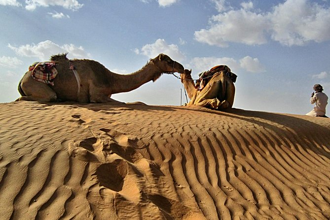 Private Camel Safari Tour to Oman Wahiba Sands