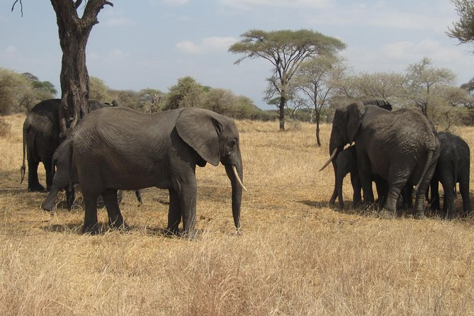 Tarangire National Park: Guided Day Tour from Arusha
