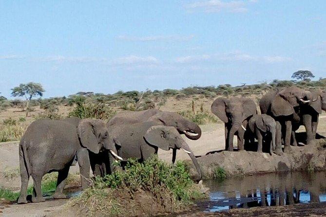 6-Day Nature and Beyond Safari