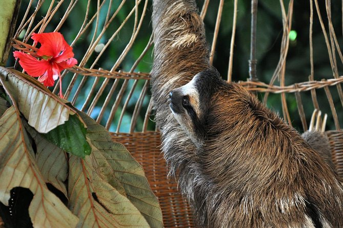 Cahuita of Puerto Viejo Caribbean wildlife and sloths watching half day tour