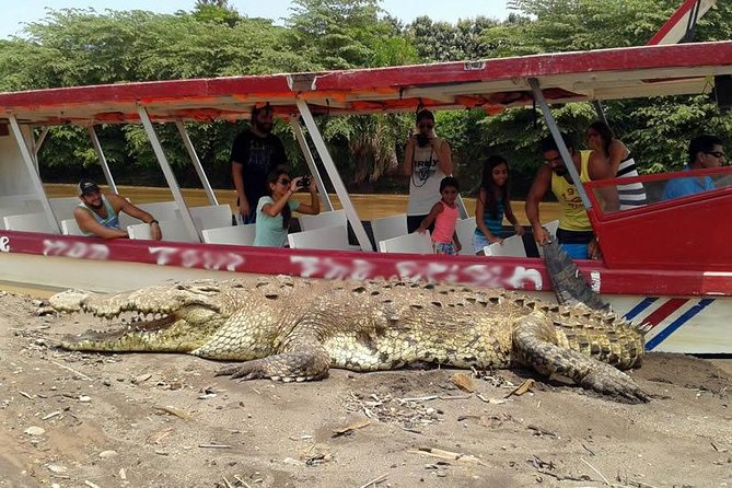 Tarcoles River Crocodile and Wildlife River Cruise