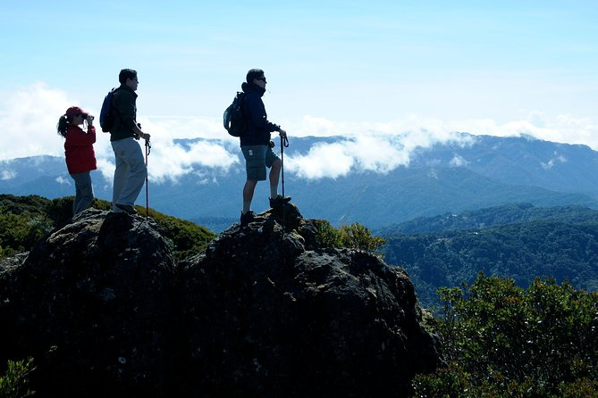 Cerro Buena Vista guided hiking and cloud forest wildlife watching tour at Talamanca