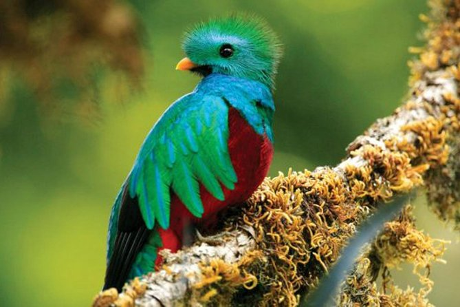 Tour to the Monteverde Reserve rainforest wildlife observation