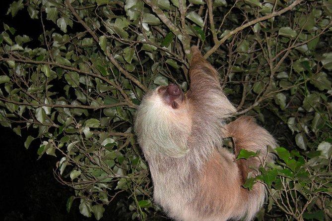 Night hike wildlife observation in Santa Elena Monteverde