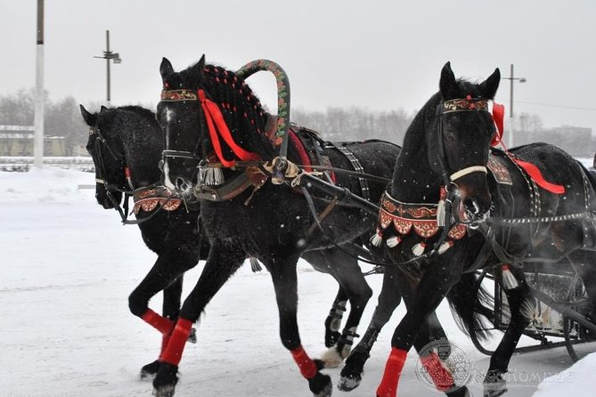 Private Half-Day Tour of St Petersburg's Royal Suburbs Including a Horse Ride in a Traditional Russian Sleigh