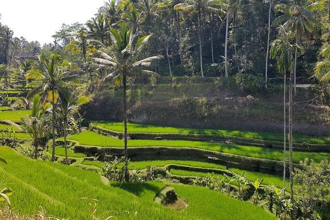 Best of Ubud : Private Customized Tour with Live Guide