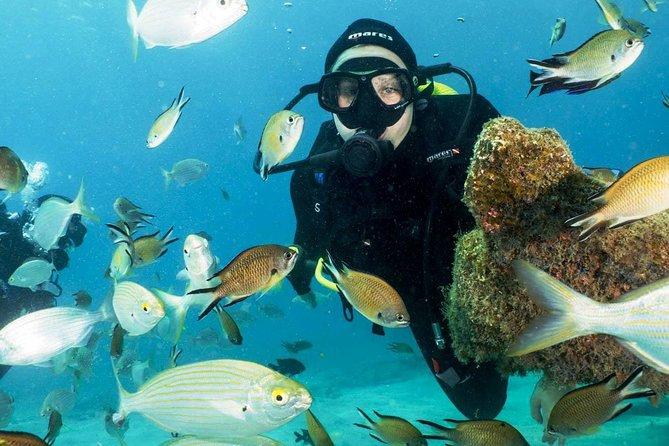 Aventure de 4plongées sous-marines de 2jours à Fuerteventura