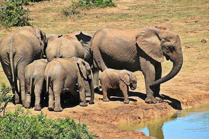 4 Day Kruger Safari (Tented)