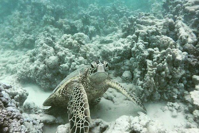 Honolulu Snorkeling in Magic Island Lagoon
