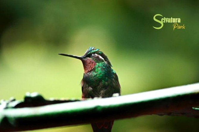 Canopy Zipline - Butterflies & Hummingbirds From Monteverde