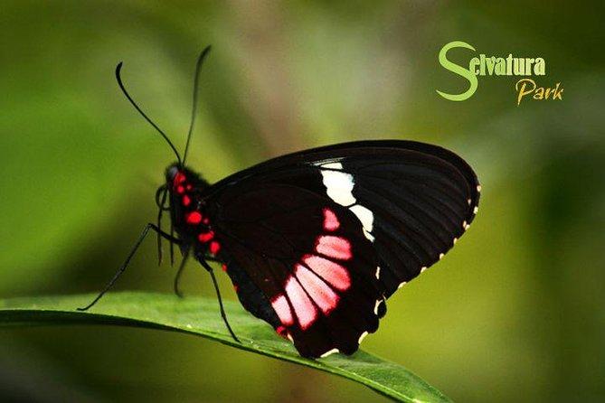 Hanging Bridges - Butterflies - Hummingbirds from Monteverde