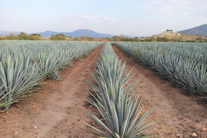 Day Trip to Tequila with Visit to your favorite Distillery