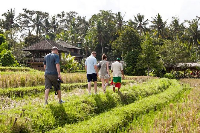 Rice Paddies Village Walking Tour