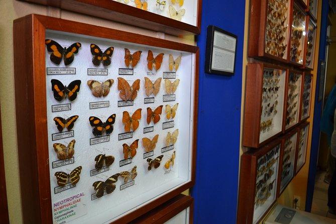 Selvatura Park Nature Tour in Monteverde