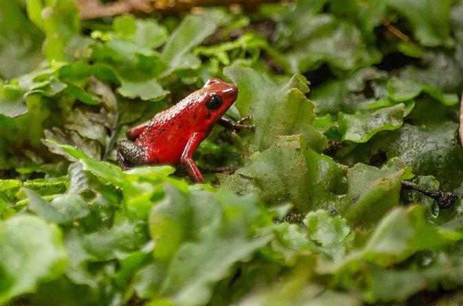 Selvatura Park: Herpetarium Tour in Monteverde