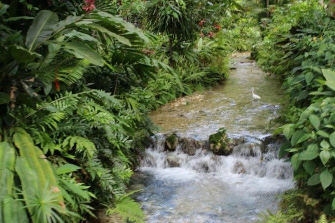 Private Botanical Garden & Plantation Tour from Ocho Rios