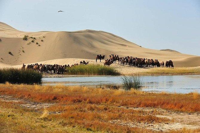 All Inclusive 5 Days in Mongolia