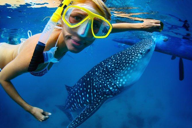 Recorrido de buceo de superficie con tiburones ballena en La Paz y almuerzo desde Los Cabos