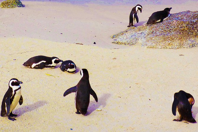Cape Point Day Tour including Boulders Penguin Colony from Cape Town