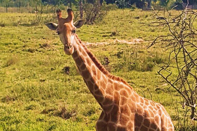 PRIVATE Mini Safari Near Johannesburg