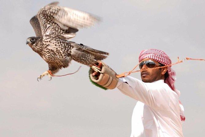 Private Falcon Show Experience