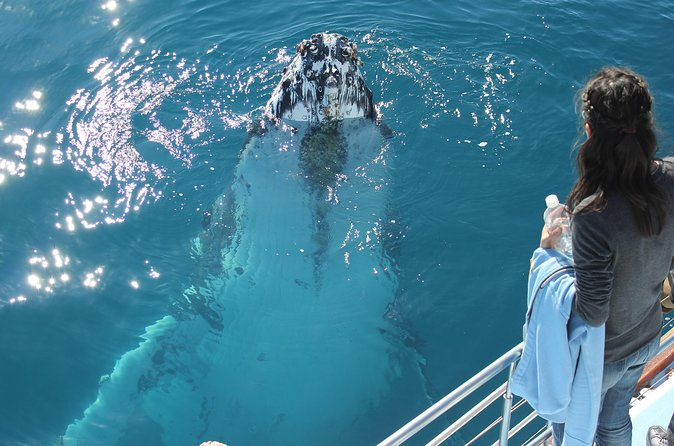Half-Day Hervey Bay Premium Whale Watching Cruise