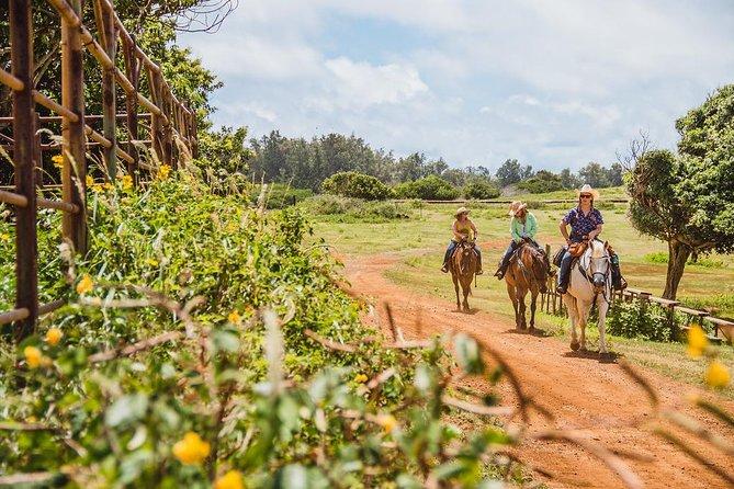 Horseback Ride Like an Authentic Paniolo in Kahuku