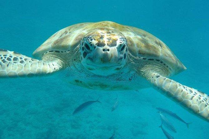 Barbados Shore Excursion: Carlisle Bay Turtle and Shipwreck Adventure