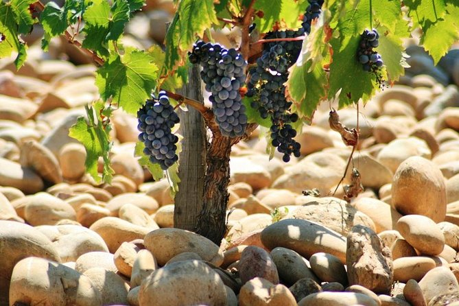 Private Full Day Cotes du Rhone Wine Tour with Tasting from Avignon