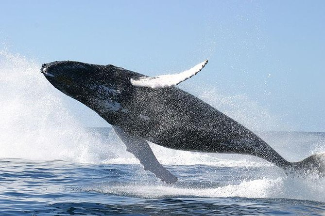 Whale Watching and Cayo Levantado Day Trip from Punta Cana