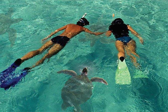 Lanai Island Dolphin and Snorkel Cruise from Lahaina Harbor