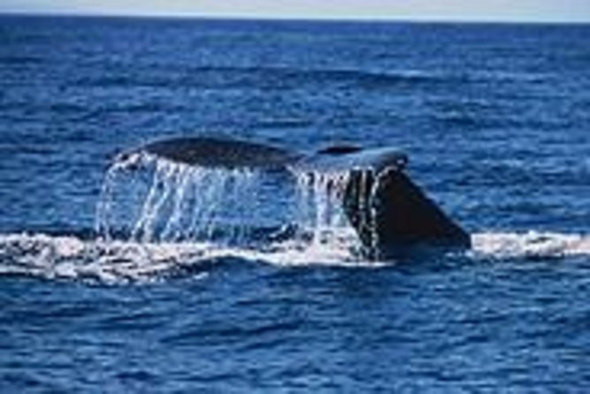 Maui Whale Watch Cruise from Lahaina Harbor