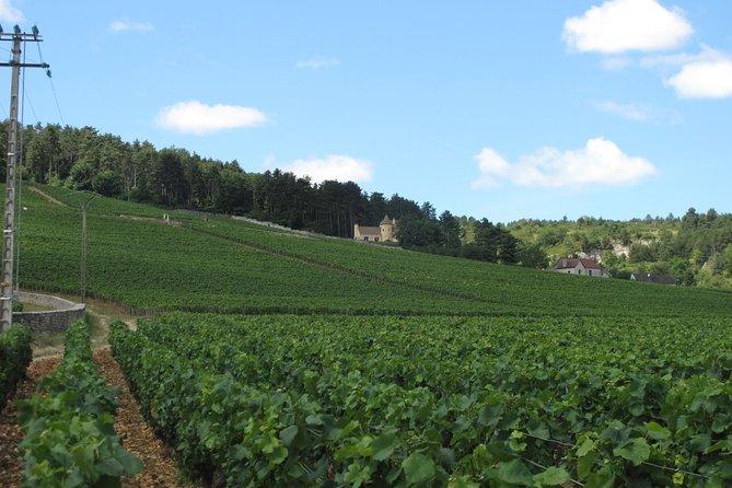 CityTour South-West : Fronton Wine Tour