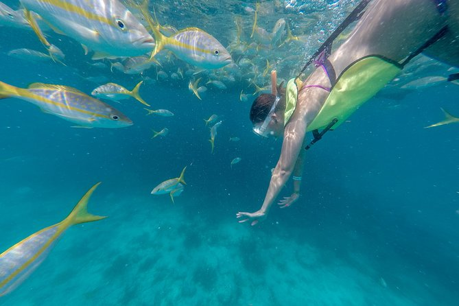 Snorkeling the sponge gardens!