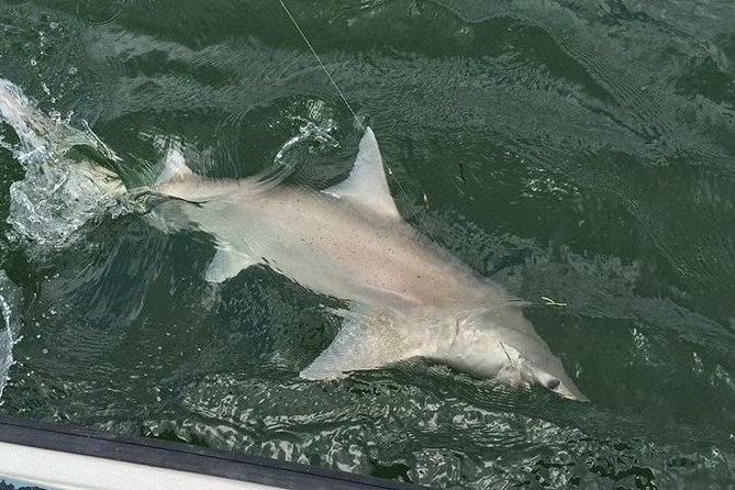 Naples Inshore Fishing Charters