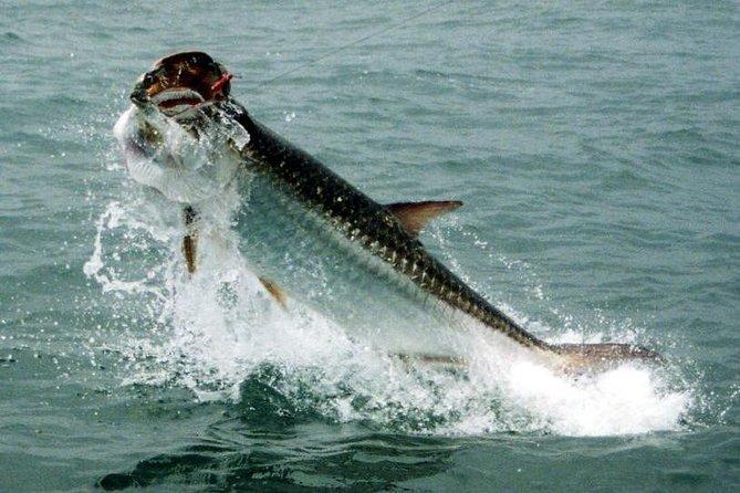 Ft Lauderdale Inshore Fishing Trip