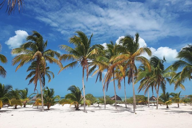 Coastal Bike Tour and Mangrove Cruise from Merida