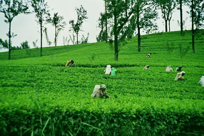 2 Days Tour to Nuwara Eliya & Sigiriya From Kandy
