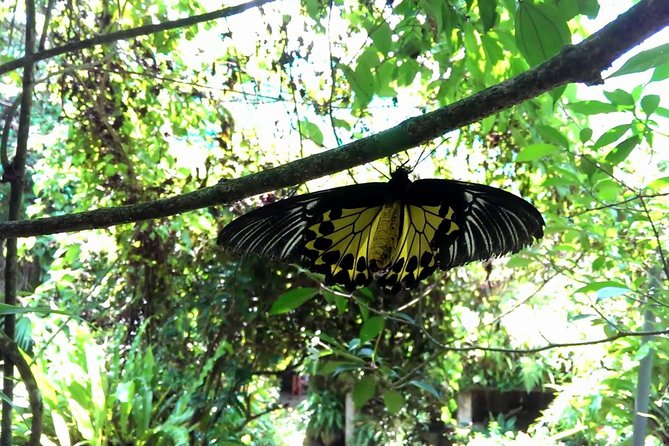 KL Butterfly Park Admission Ticket with Free Kuala Lumpur City Tour