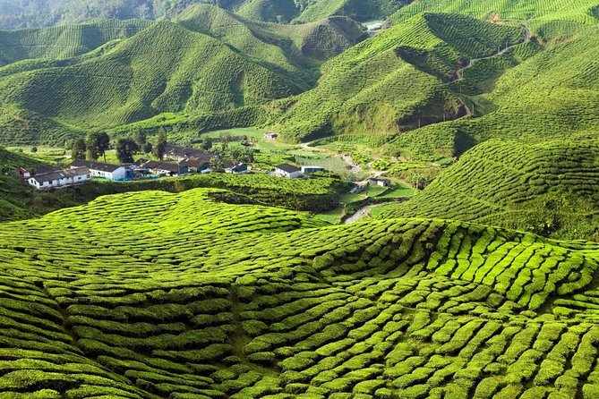 Private Full Day Cameron Highland Day Tour